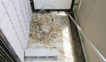 ハトの糞清掃の写真 清掃前